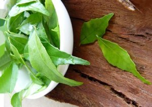 Benefits-of-curry-leaves