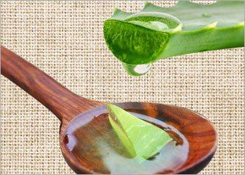Aloe-vera-gel-for-canker-sores