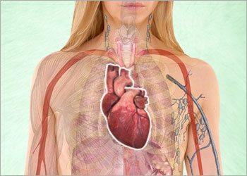 Promotes-cardiovascular-health