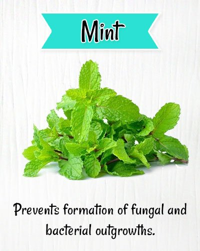 Mint Leaves for Itchy Scalp