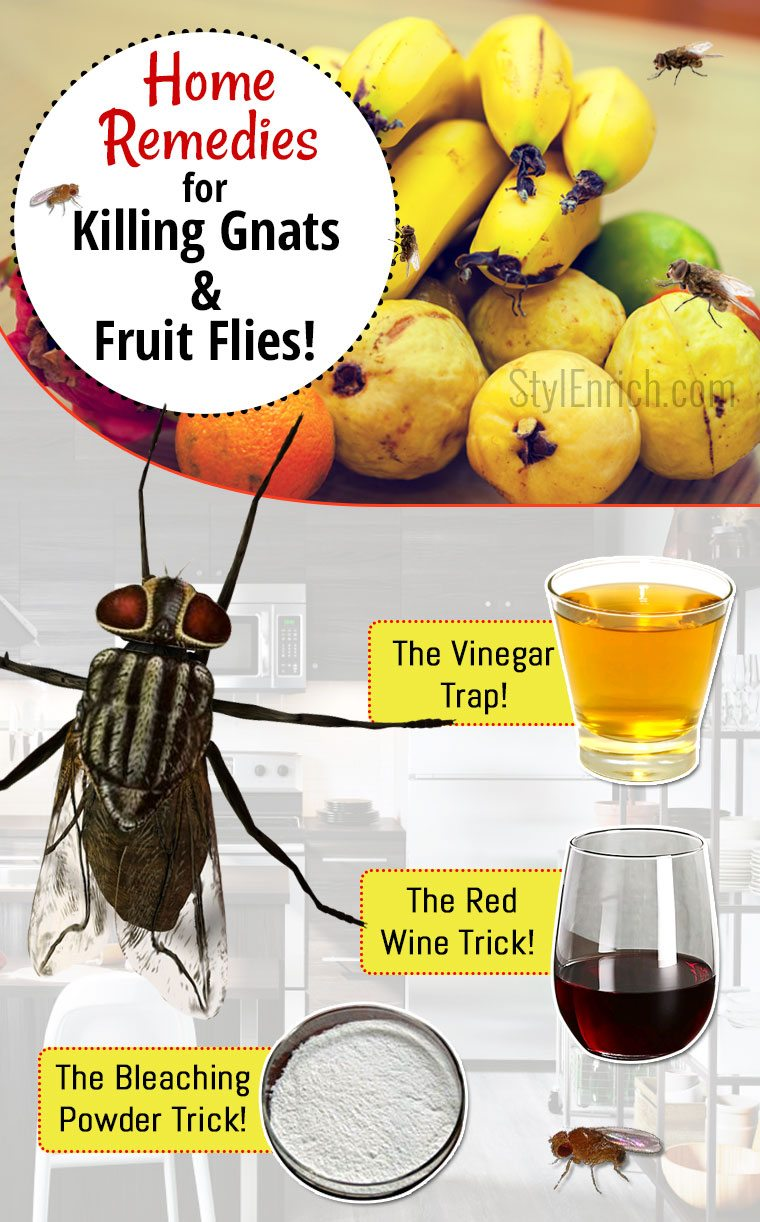 Best Way To Kill Gnats In Kitchen