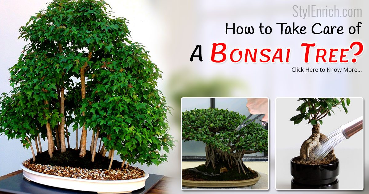 How to Take Care of a Bonsai Tree With Necessary Steps?