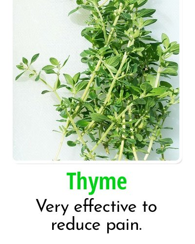 Thyme for Toothache