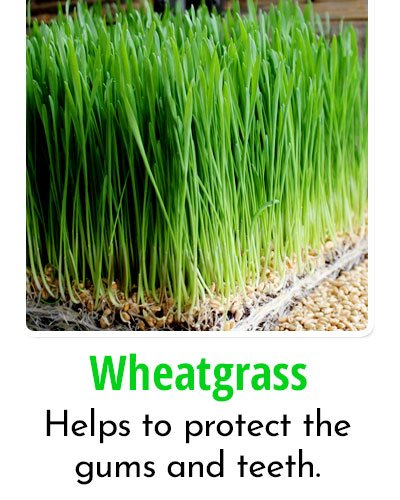 Wheatgrass for Toothache