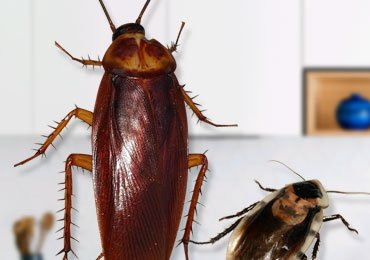 How to Get Rid of Cockroaches in Kitchen Using Simple Household Tips?
