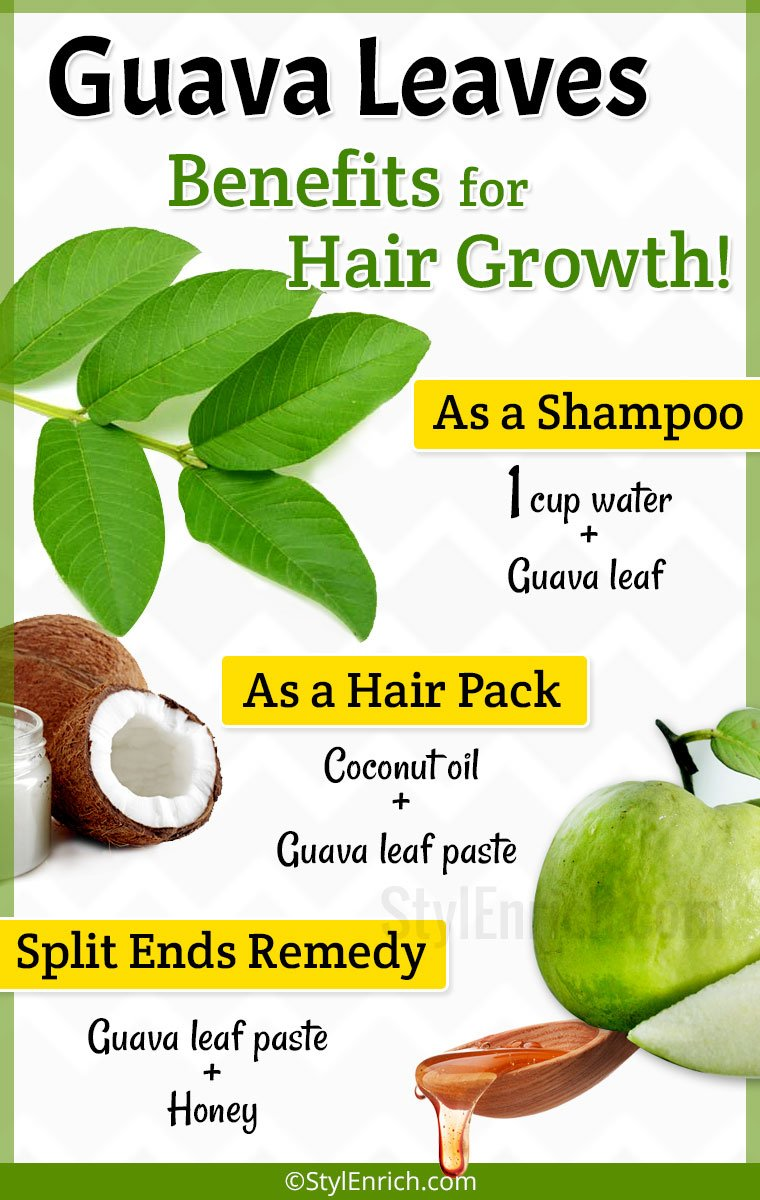 Guava Leaves For Hair Growth Get Rid Of Hair Fall