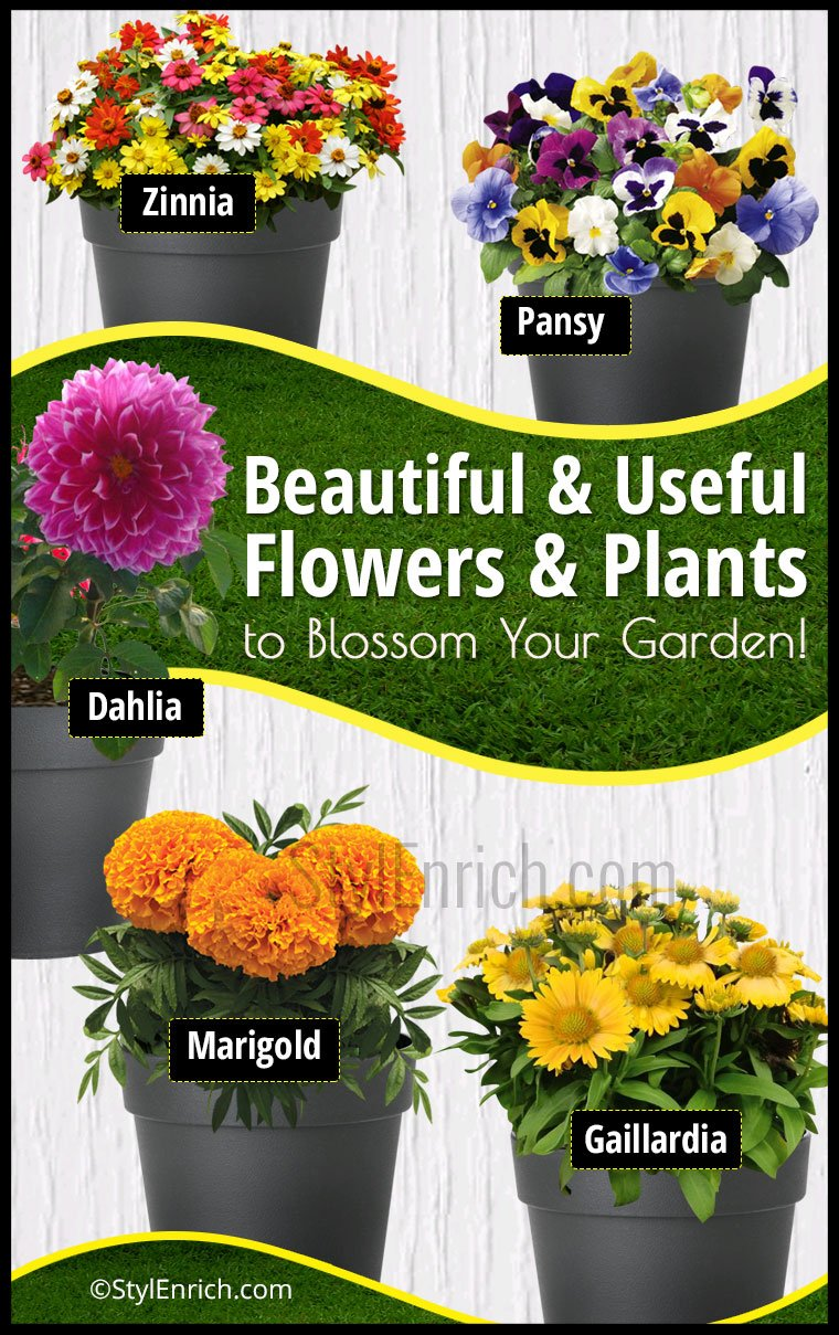 Useful Plants For Home