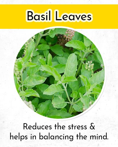 Basil Leaves to Control Low Blood Pressure