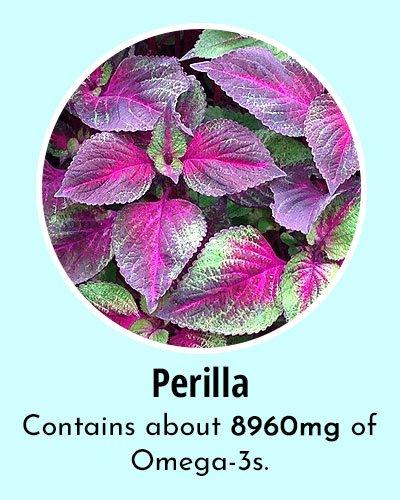 Perilla Omega 3 Rich Foods
