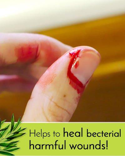 Tea Tree Oil Antibacterial Benefits