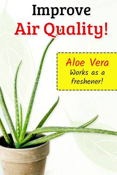 Aloe Vera To Improve Air Quality