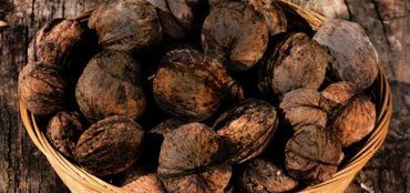 Black Walnut Benefits