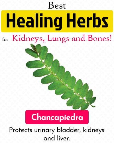 Chancapiedra Healing Herb