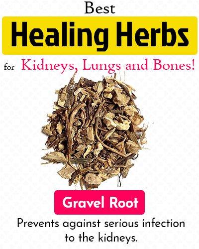 Gravel Root Healing Herb