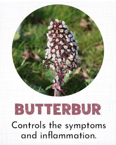 Butterbur for Allergy