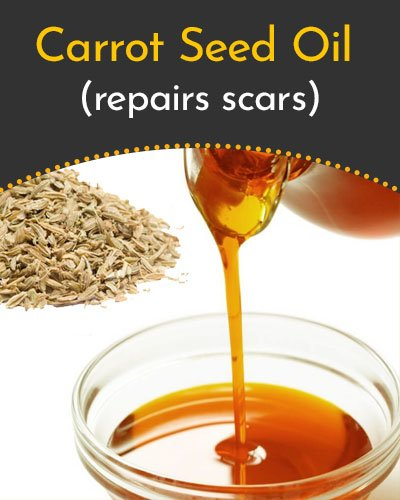 Carrot Seed Essential Oil for Scars
