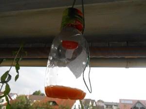 Wespenfruchtfliegenfalle Selber Bauen  Stylensmile