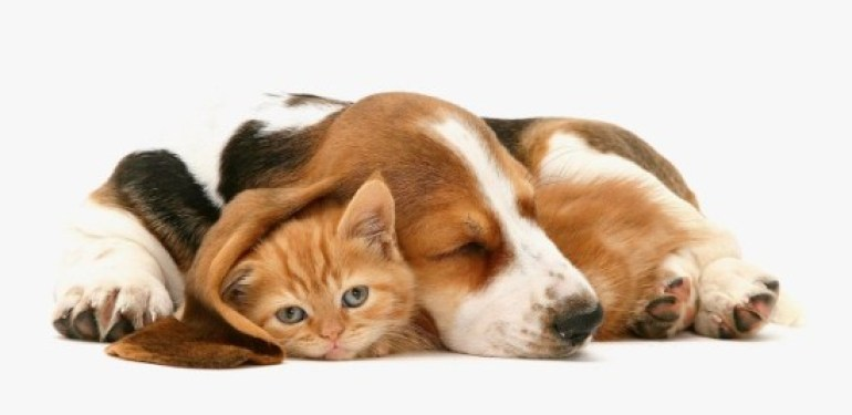 cute animals, cats and dogs, kitten, puppy, animal photography, cute, animal love