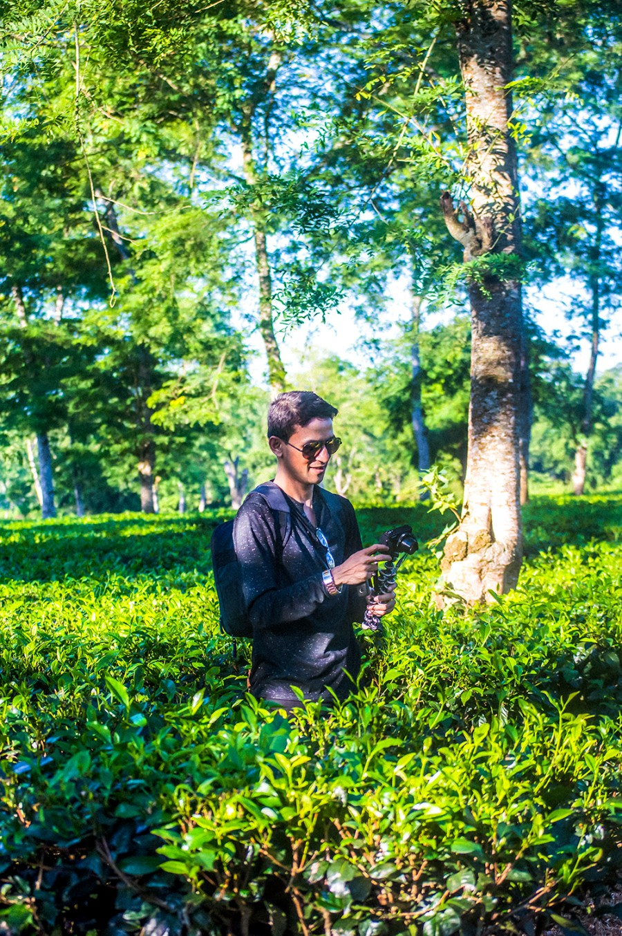 Kaziranga, Travel, Road Trip, Indian Blogger, Style Over Coffee, Assam, Tea Plantation-3