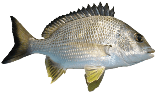 Types of fishes 13