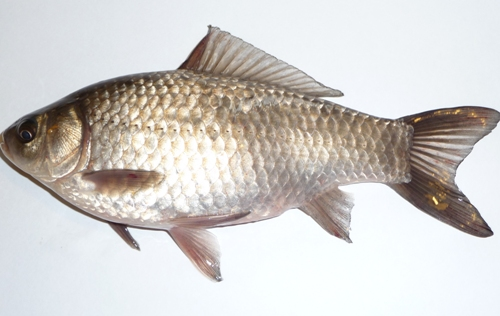 Types of fishes 2