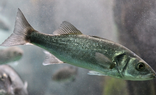 Types of fishes 7