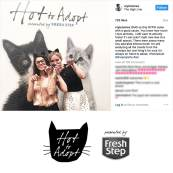 Hot2Adopt with Fresh Step