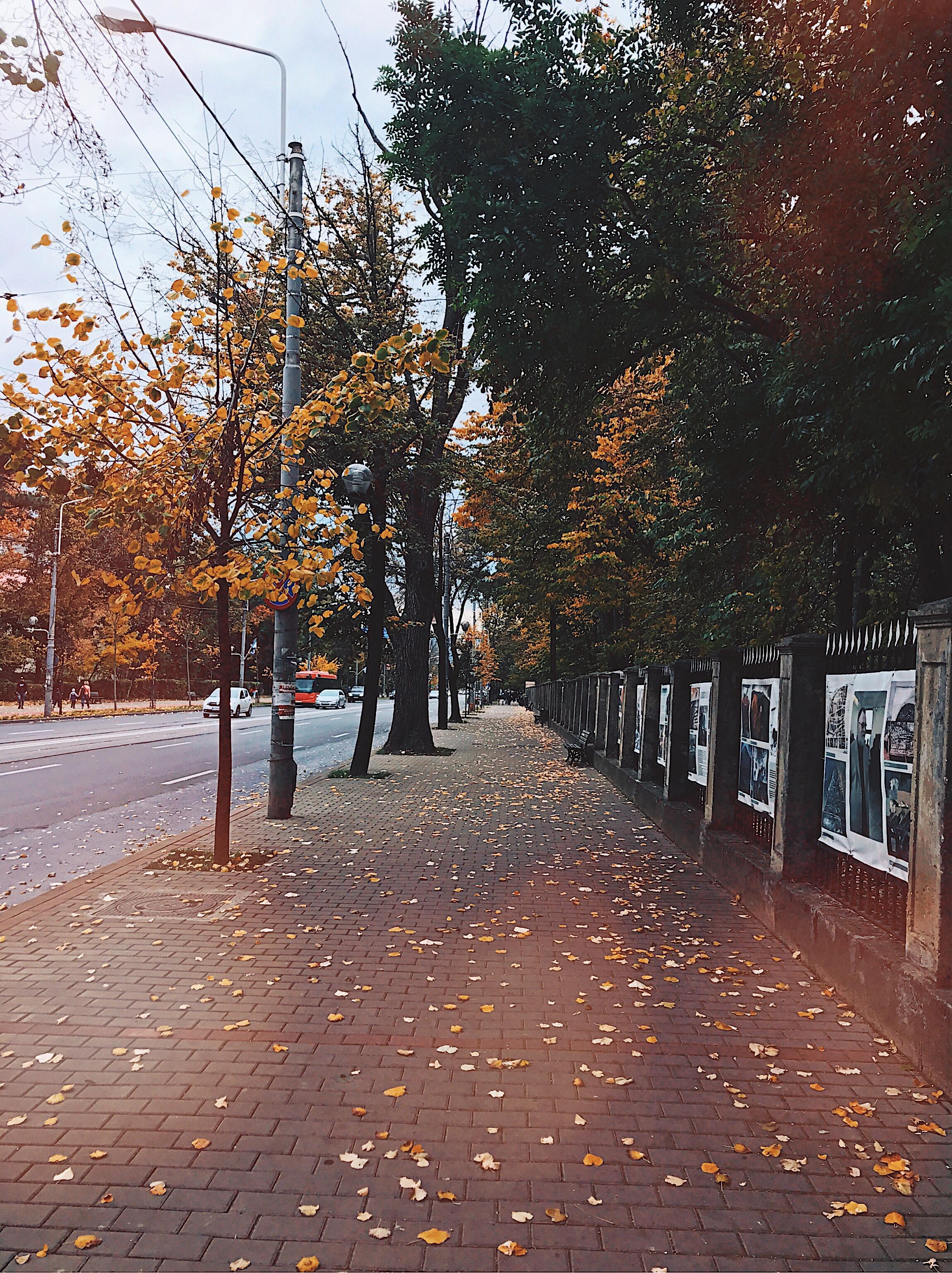 Copou Park Iasi Romania