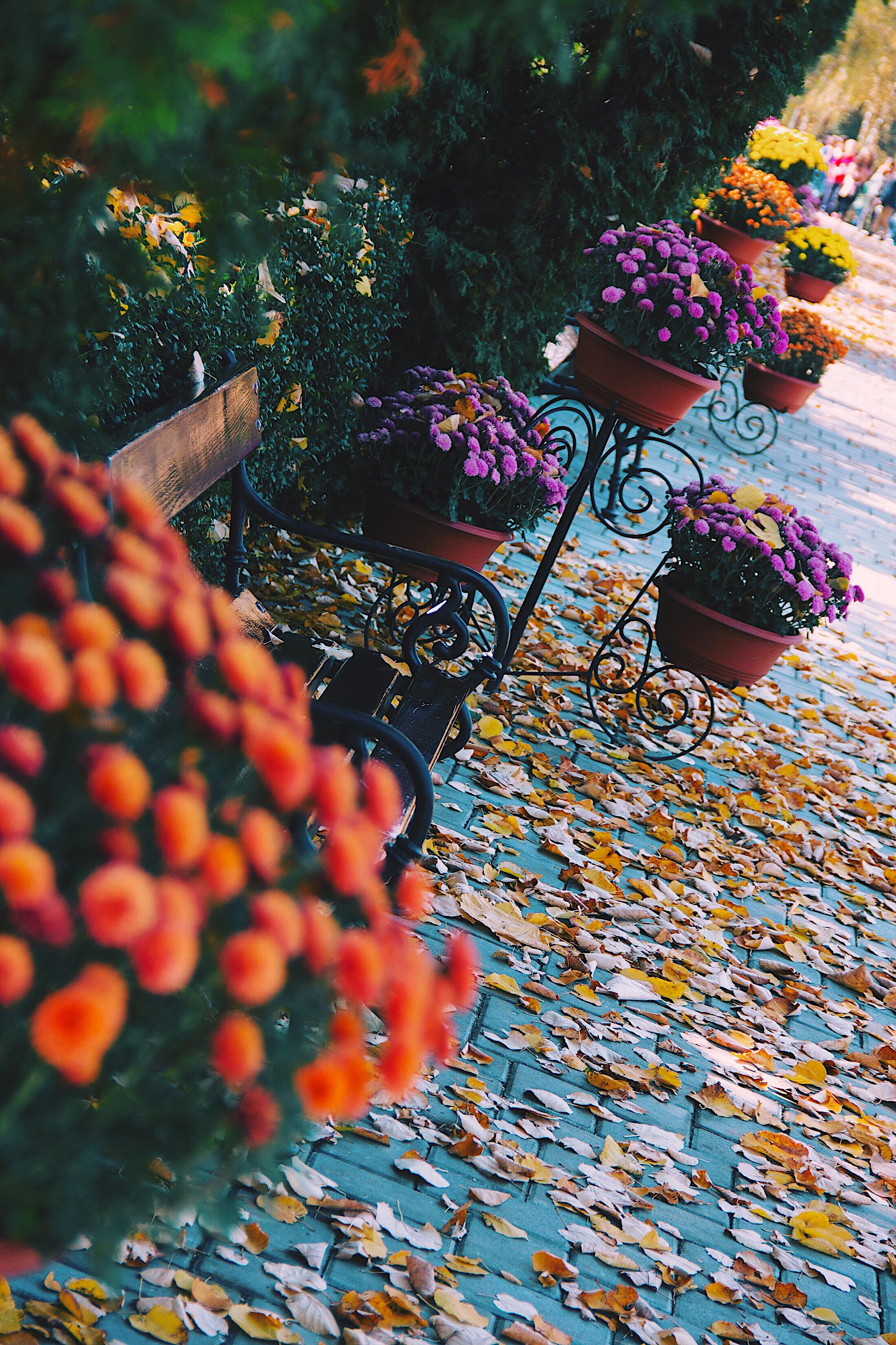 Autumn Flowers Style Unsettled