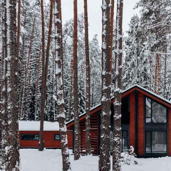 cold snow wood light