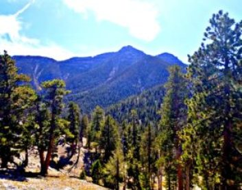 Hiking through Mt. Charleston on the Bristlecone Trail