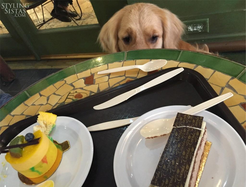 cake-dog-Styling-sistas