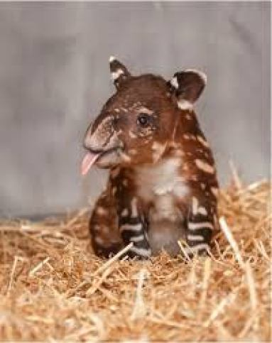 baby animal awww