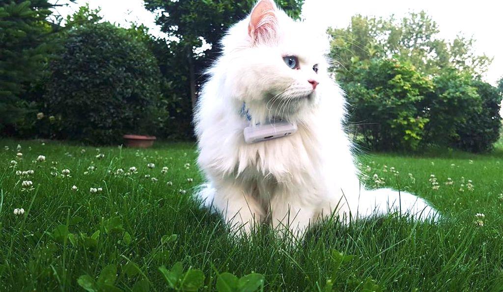 weenect cats 2 avis prix test