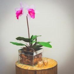 Arranjo de Orquídea Catlleya - Formosinha Decorações