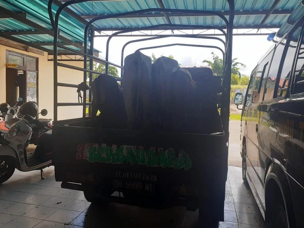 Upaya Penyeberangan Hewan Ilegal Digagalkan Polres Rote Ndao