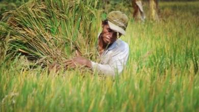 Photo of Petani Sangat Berperan di Tengah Pandemi, Tapi Belum Sejahtera