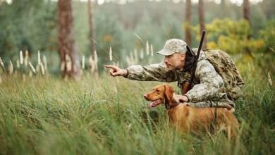 Photo of Bolehkah Memelihara Anjing?