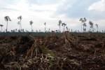 Pemerintah dan MA Diminta Perkuat Penegakan Hukum Lingkungan Hidup dan Sumber Daya Alam