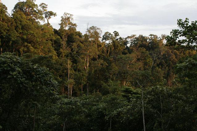 cinta hutan indonesia wwf