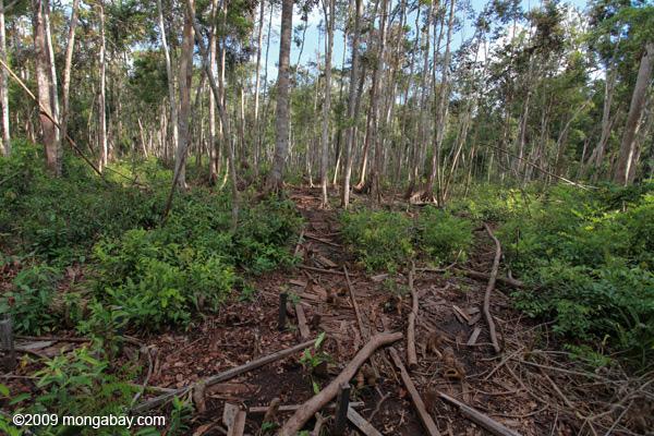 suara jakarta hutan borneo kalimantan lingkungan hijau