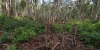 Dibutuhkan Langkah Nyata Capai Pembangunan Hijau di Jantung Borneo