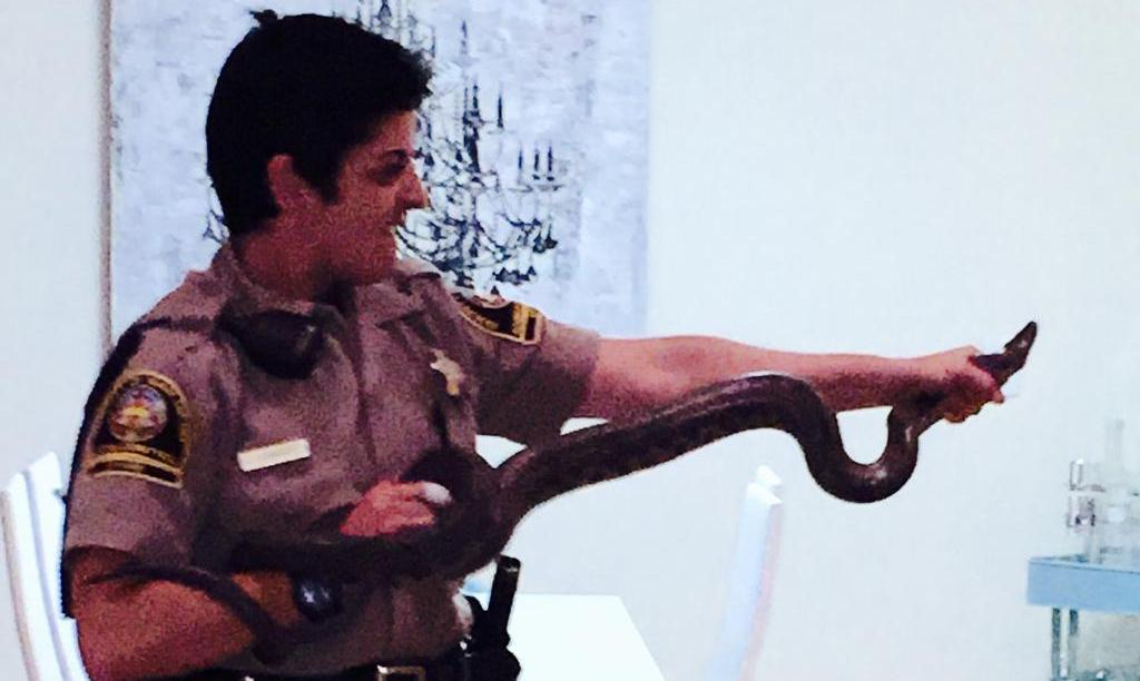 suara jakarta ular sepanjang 5,5 kaki muncul di toilet wanita