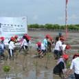 Siswa Sekolah Satu Hati binaan AHM mengikuti penanaman mangrove di desa Pantai Bahagia Muara Gembong (25/6). Memperingati Hari Bumi 2015, AHM bersama ratusan Sahabat Satu Hati melakukan aksi penanaman 1.000 pohon mangrove sebagai upaya perusahaan dalam menjaga kelestarian lingkungan. (Foto: AHM)