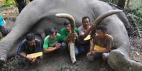 Netizen Protes Ada Toko Online Jual Gading Gajah