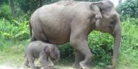 Kematian Satwa Liar Meningkat, WWF Indonesia Desak Polhut Ditambah