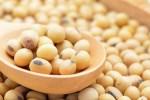 Kedelai dan Protein Nabati, Sebuah Opini I Wayan Budiartawan