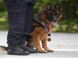 Photo of Lao Wu – Anjing pertama terima anugerah Polis Pahang