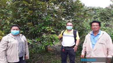 Photo of Wartawan cekap imbangi kerjaya dan berkebun durian Musang King