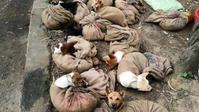 Photo of Nagaland haram penjualan daging anjing